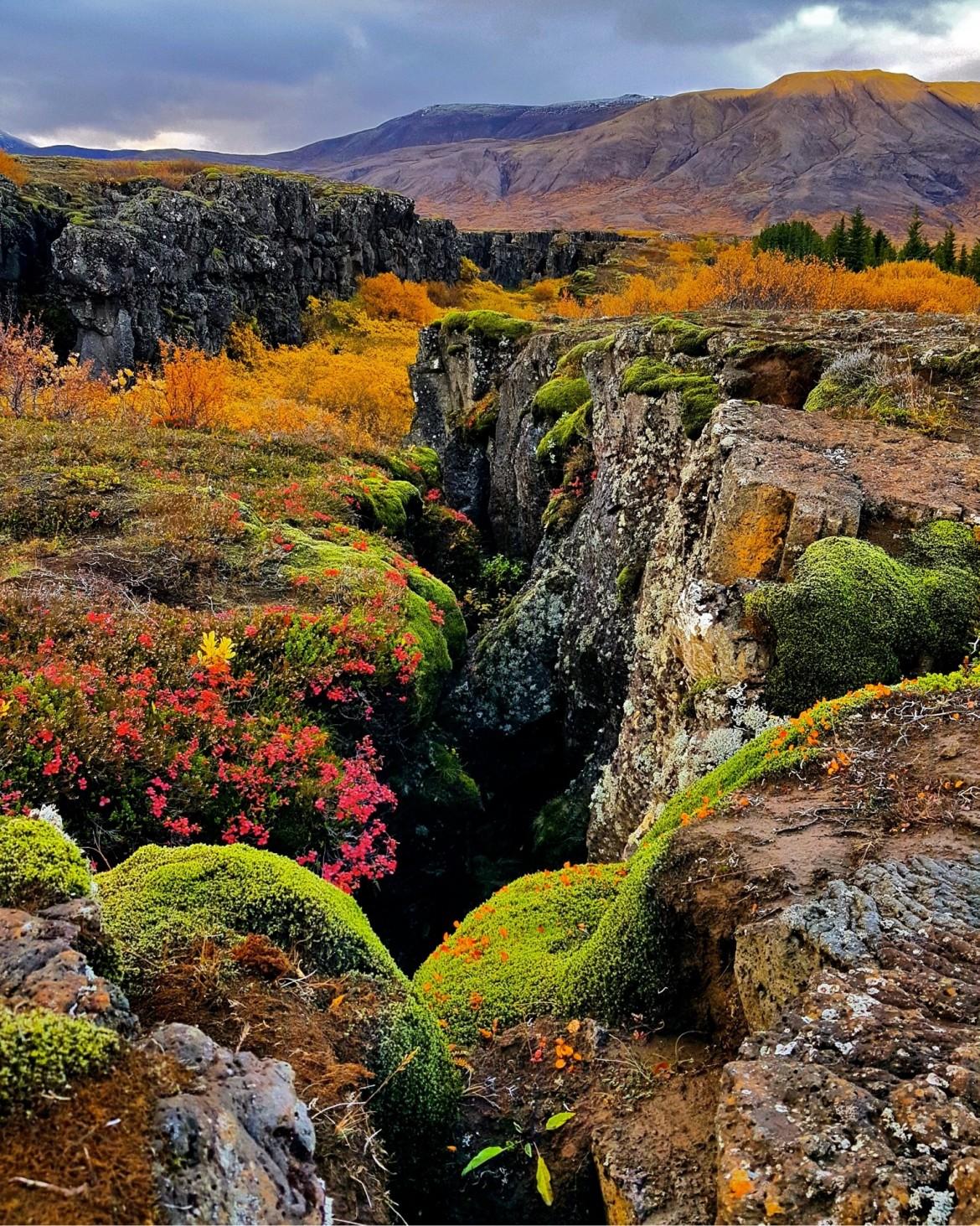 Islande automne Thingvellir